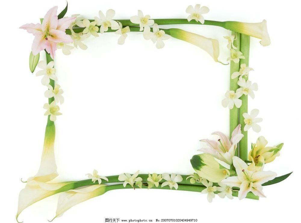 百合花边框图片