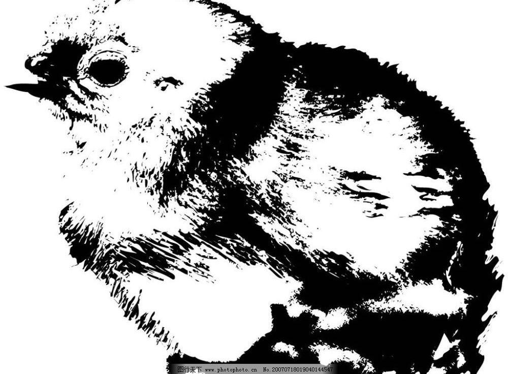 小鸡水墨画 鸟禽 写生 写意 水墨 写生画 写意画 水墨画 矢量 文化