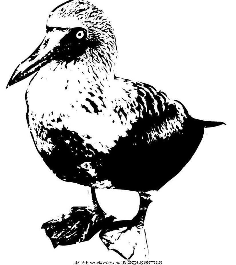 鸟水墨画 鸟 鸟禽 写生 写意 水墨 写生画 写意画 水墨画 矢量 文化