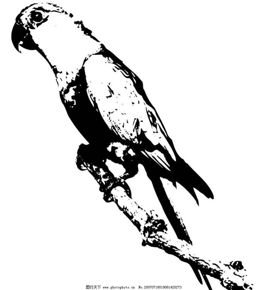 鹦鹉 鸟水墨画 鸟 鸟禽 写生 写意 水墨 写生画 写意画 水墨画 矢量