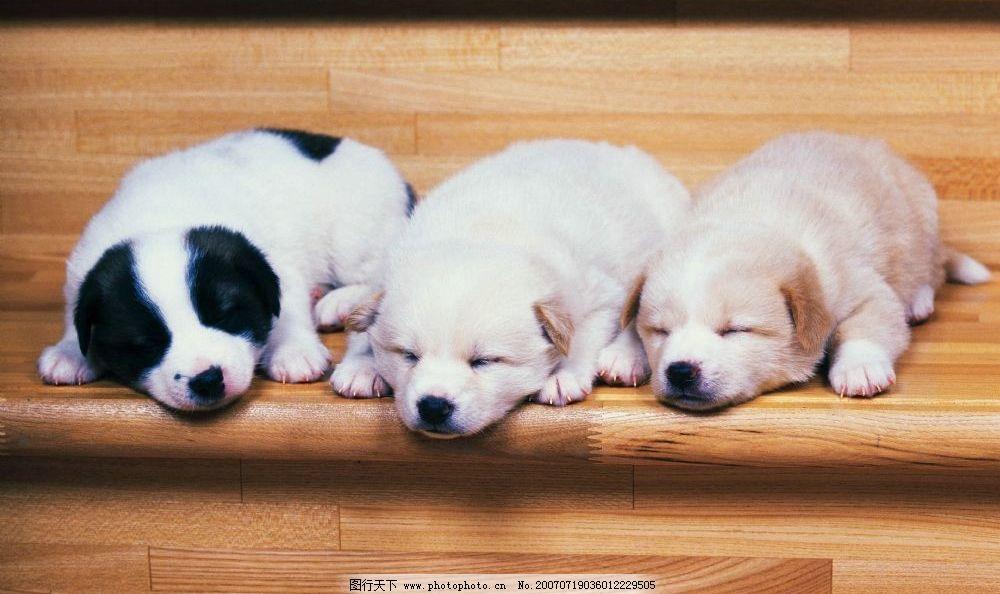 小狗睡觉 小狗狗 狗宝宝 狗狗 狗 小狗 宠物狗 小动物 小狗的图片 犬