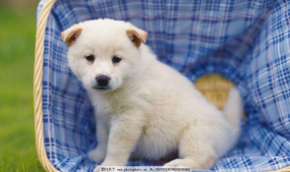 宠物狗 小动物 小狗的图片 犬类图片 乖乖狗 犬类 犬 动物 生物世界
