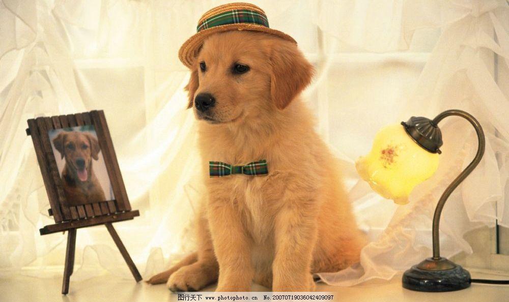 戴帽子小狗图片