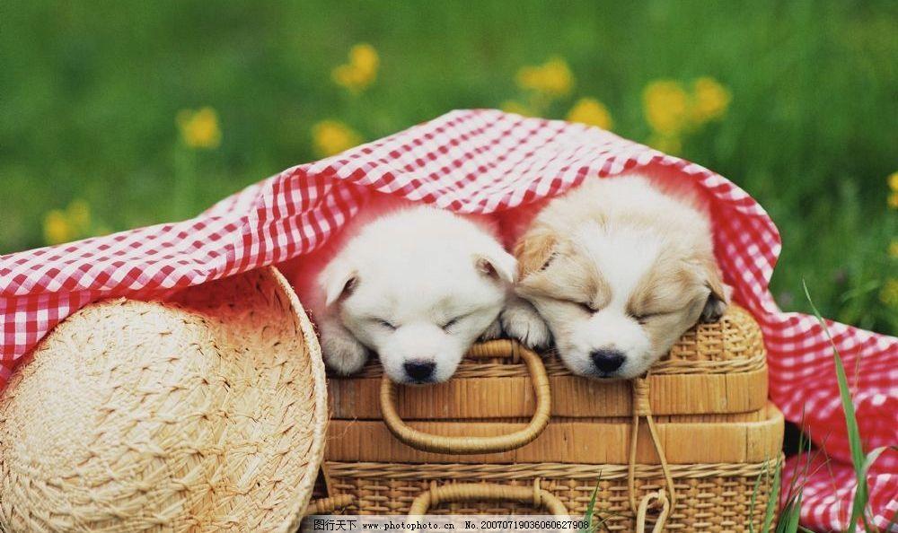 儿童动物睡觉图片
