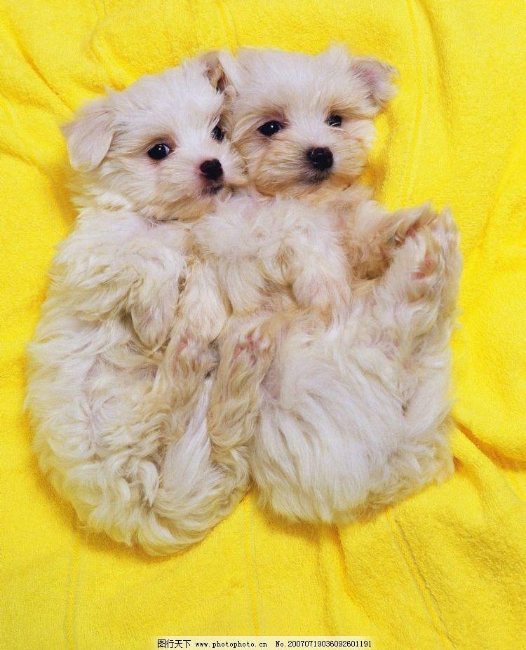 两只可爱小狗 小狗狗 狗宝宝 狗狗 狗 小狗 宠物狗 小动物 小狗的图片