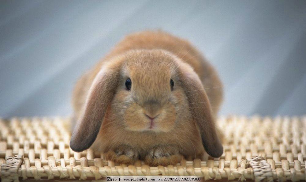 壁纸 床 动物 家居 家具 兔子 卧室 装修 1000_594