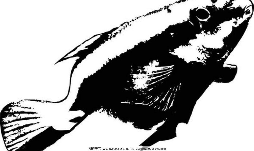鱼的黑白图图片
