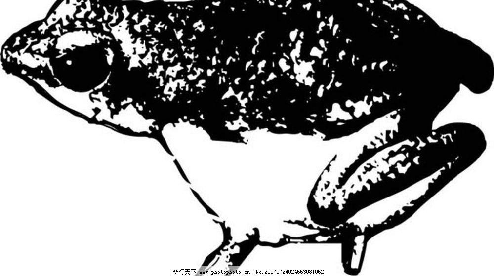 青蛙的水墨画 鱼 水墨画 写生 写生画 写意画 画 中国画鱼 矢量 生物