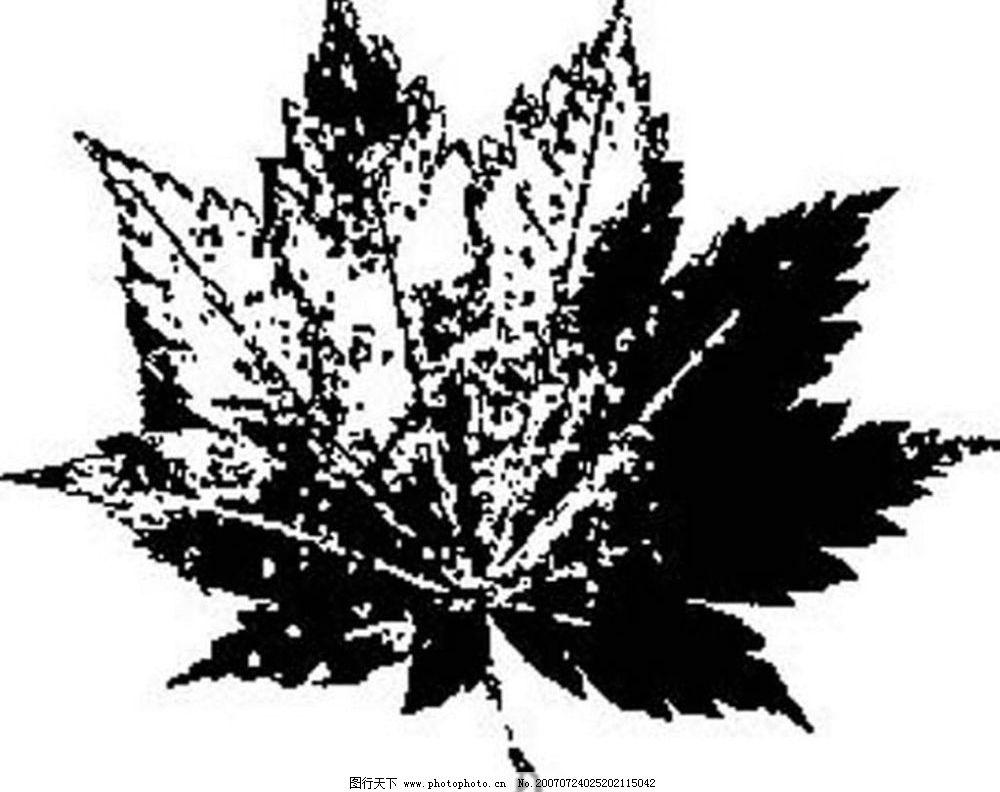 树木叶子 树叶 植物叶子 黑白画 矢量 黑白植物叶子 矢量图库