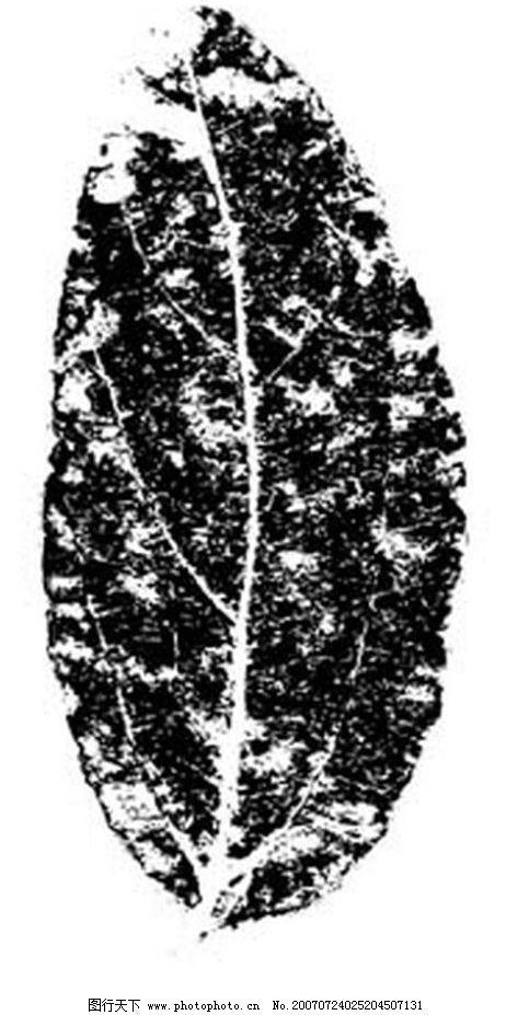 树叶 叶子 植物叶子 黑白画 矢量 生物世界 树木 黑白植物叶子 矢量图