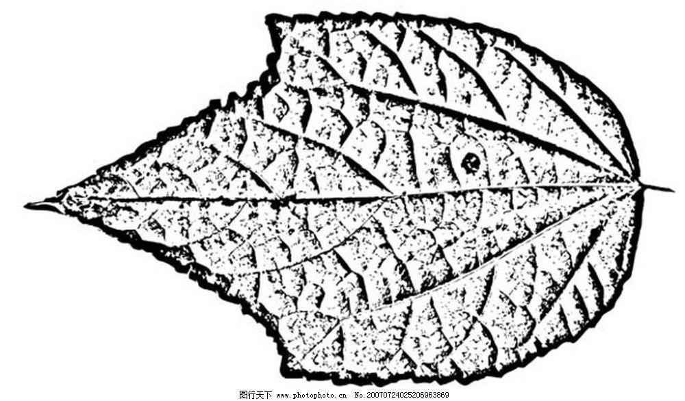 叶子的黑白 树叶 植物叶子 黑白画 矢量 树木 黑白植物叶子 矢量图库