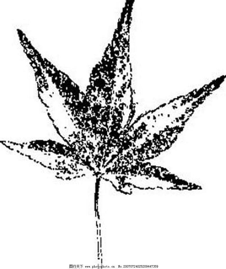 叶子画 树叶 叶子 植物叶子 黑白画 矢量 生物世界 树木 黑白植物叶子