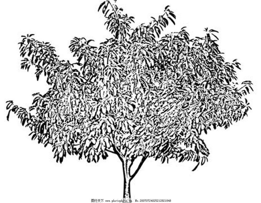 树木 黑白画 矢量 黑白植物叶子 矢量图库