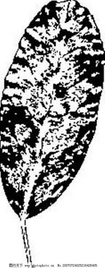 树叶的黑白画 树叶 叶子 植物叶子 黑白画 矢量 生物世界 树木 黑白