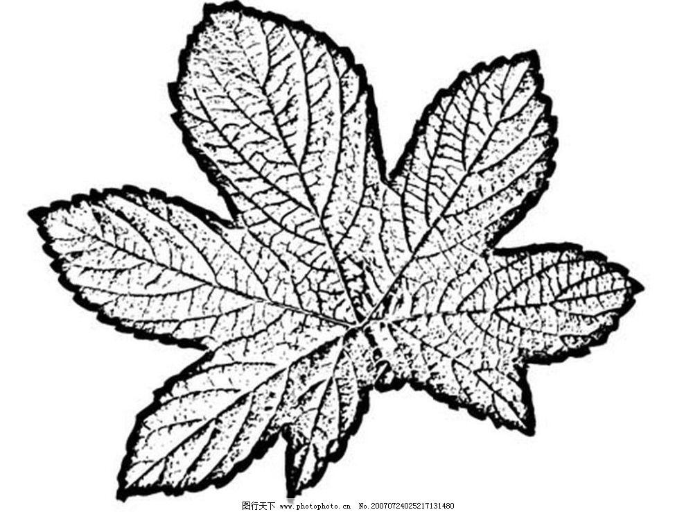 叶子 树叶 植物叶子 黑白画 矢量 生物世界 树木 黑白植物叶子 矢量图