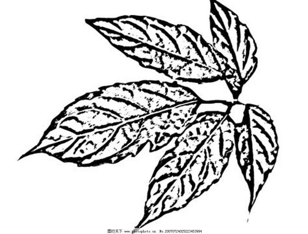 树叶 叶子 植物叶子 黑白画 矢量 生物世界 树木 黑白植物叶子 矢量