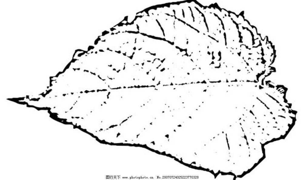 黑白树叶图片
