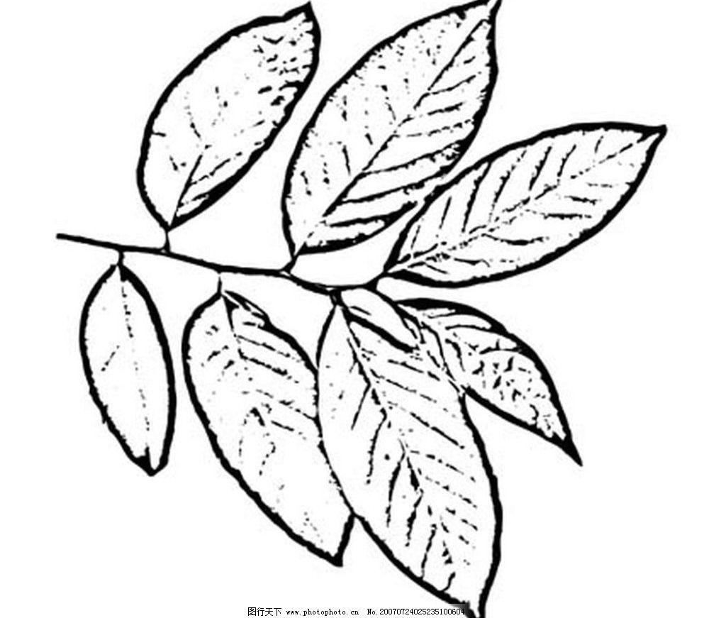 植物叶子 树叶 叶子 黑白画