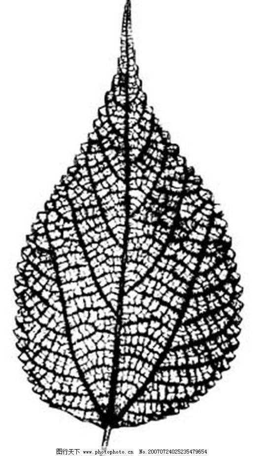 植物叶子 树叶 叶子 黑白画 矢量 生物世界 树木 黑白植物叶子 矢量