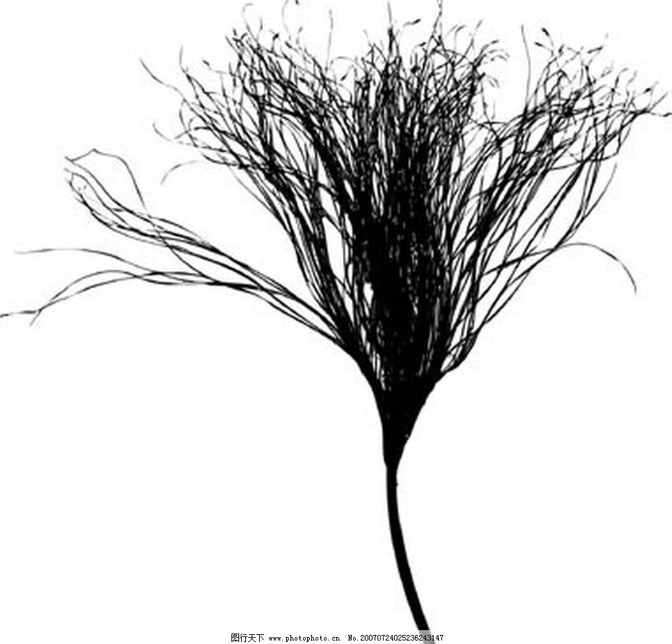 植物 树叶 叶子 植物叶子 黑白画 矢量 生物世界 树木 黑白植物叶子