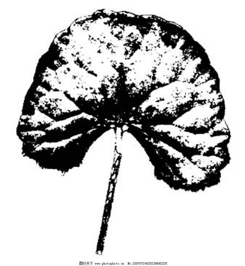 黑白树叶 树叶 叶子 植物叶子 黑白画 矢量 生物世界 树木 黑白植物