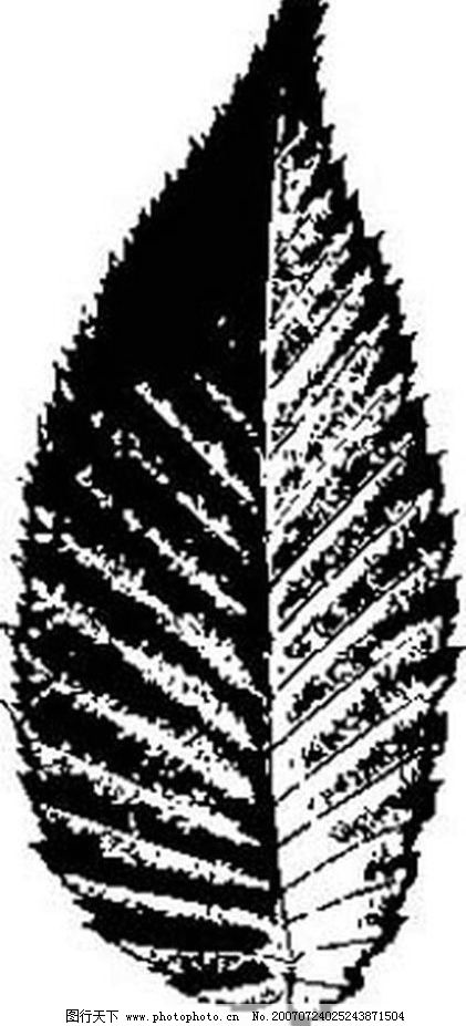 树叶画 树叶 叶子 植物叶子 黑白画 矢量 生物世界 树木 黑白植物叶子
