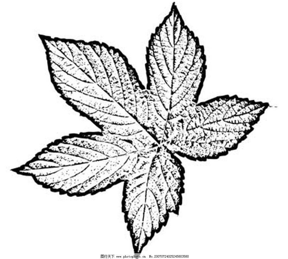 黑白叶子 树叶 叶子 植物叶子 黑白画 矢量 生物世界 树木 黑白植物叶图片