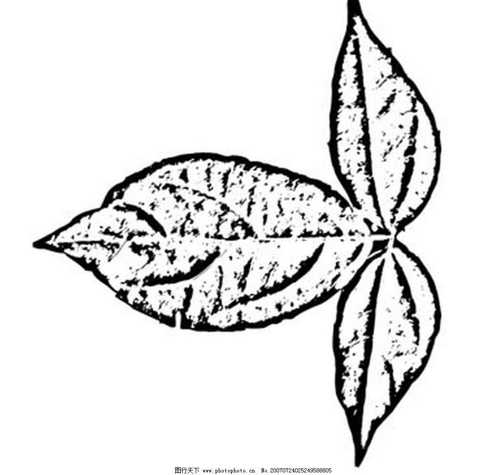 树叶 叶子 植物叶子 黑白画