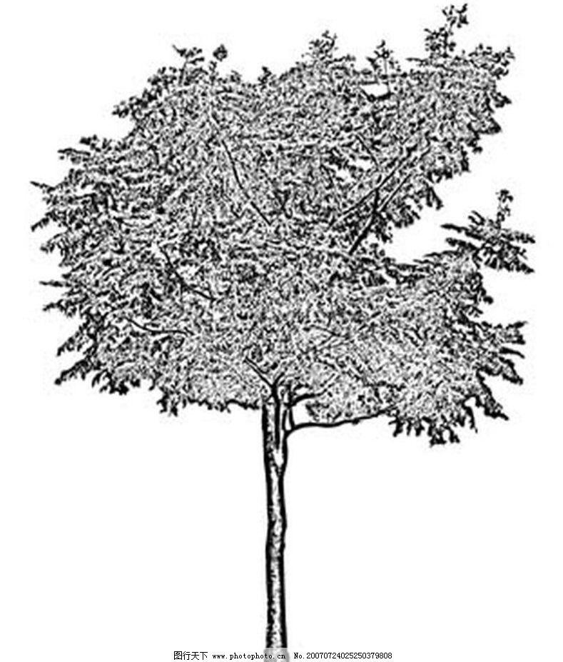 树木 树 黑白画 矢量 生物世界 黑白植物叶子 矢量图库 ai