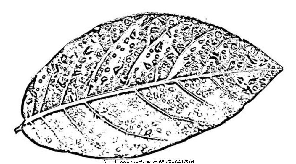 黑白树叶 树叶 叶子 植物叶子 黑白画 矢量 生物世界 树木 黑白植物叶