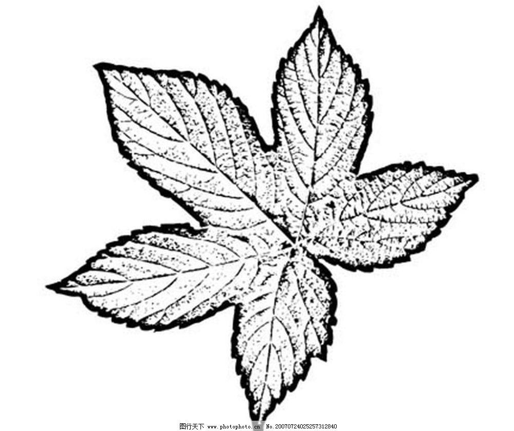 叶子 树叶 植物叶子 黑白画 矢量 生物世界 树木 黑白植物叶子 矢量
