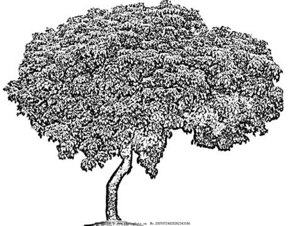 树的黑白图片