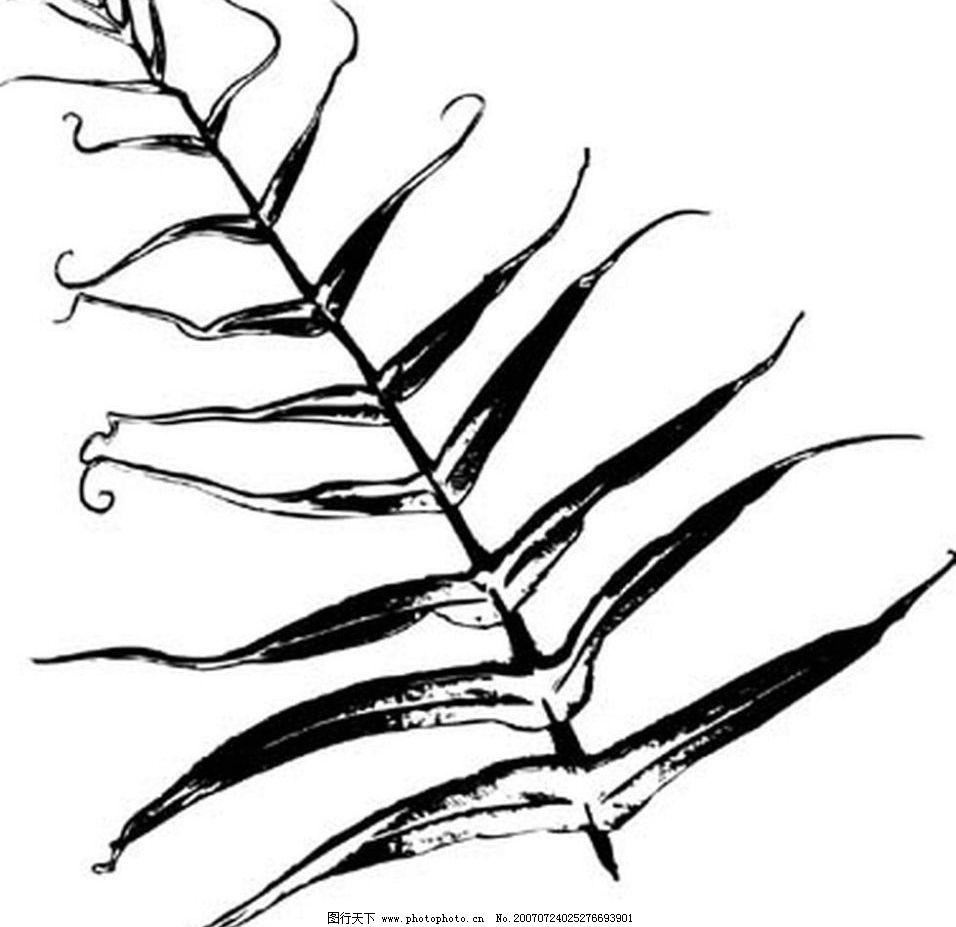 植物叶子 树叶 叶子 黑白画 矢量 生物世界 树木 黑白植物叶子 矢量图