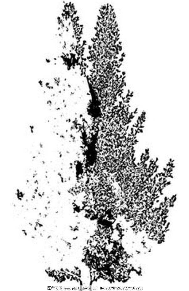 柏树 树 黑白画 矢量 生物世界 树木 黑白植物叶子 矢量图库 ai