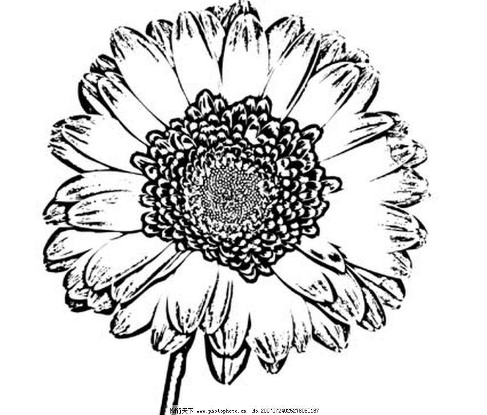 花朵的黑白画 花 花朵 黑白画 矢量 生物世界 树木 黑白植物叶子 矢量
