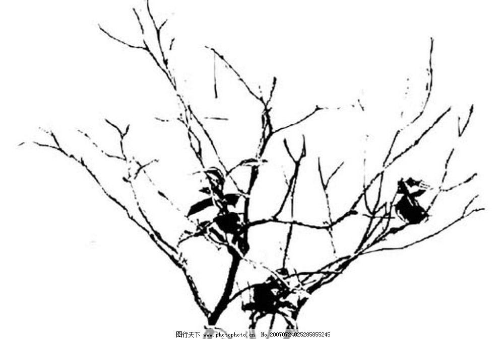 树枝的黑白画 树叶 叶子 植物叶子 黑白画 矢量 生物世界 树木 黑白