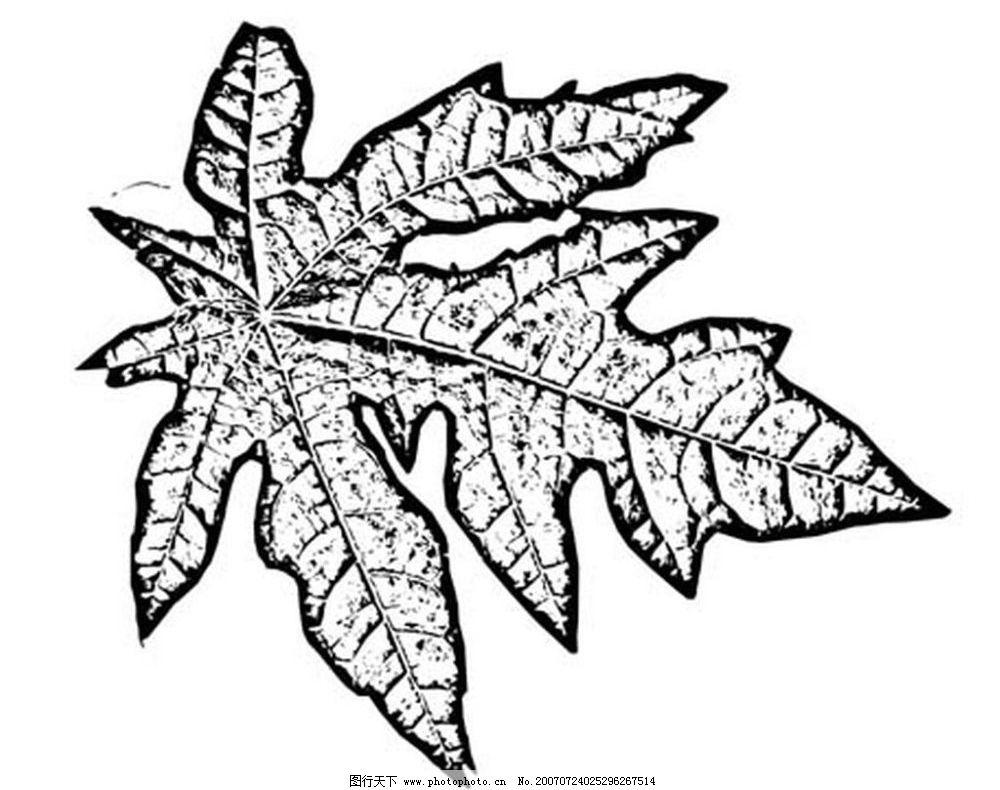 植物叶子图 树叶 叶子 植物叶子 黑白画 矢量 生物世界 树木 黑白植物