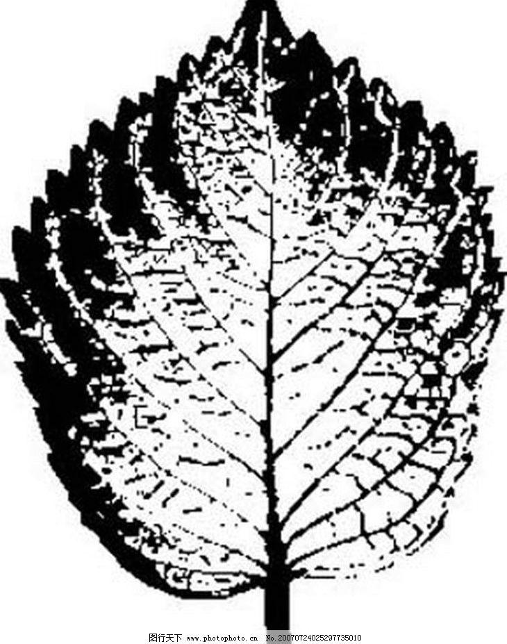 黑白树叶 叶子 植物叶子 黑白画 矢量 树木 黑白植物叶子 矢量图库
