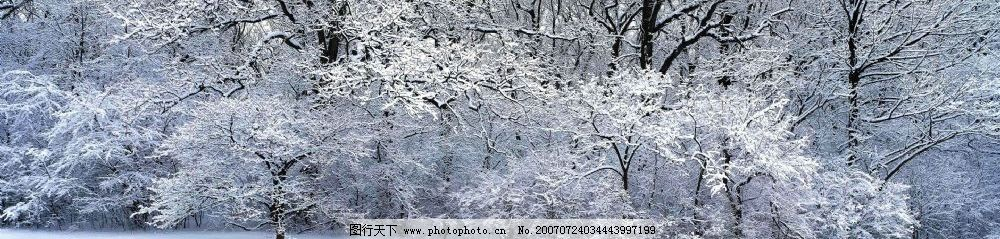 冰雪覆盖下的森林图片