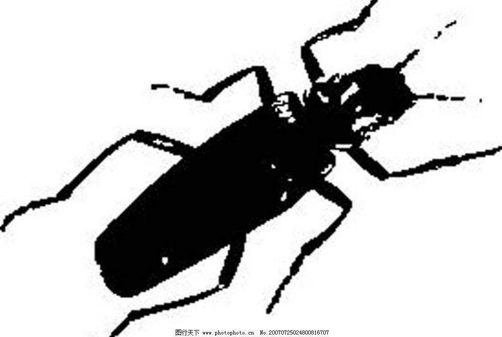 黑白矢量图 黑白素材 黑白画 黑白图 矢量 生物世界 昆虫黑白矢量图