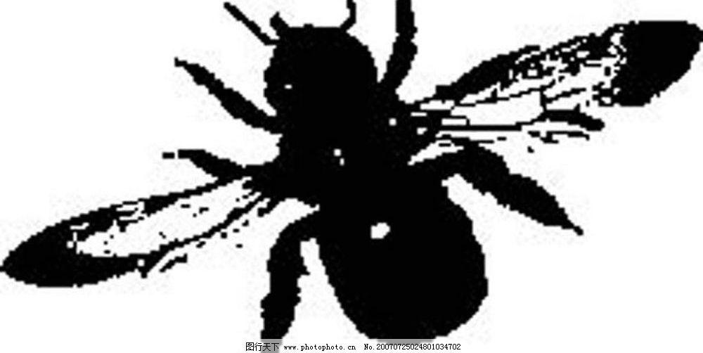 苍蝇 黑白昆虫 黑白矢量图 黑白素材 黑白画 黑白图 黑白昆虫矢量图