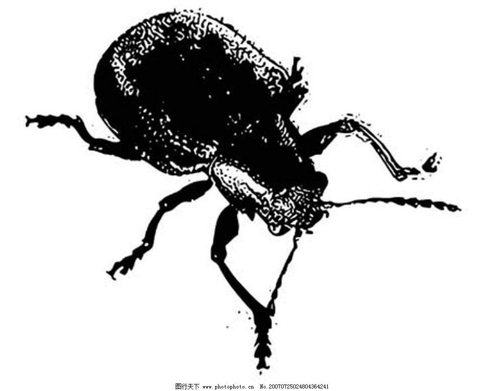 甲壳虫 昆虫 黑白昆虫 黑白矢量图 黑白素材 黑白画 黑白图 矢量 生物