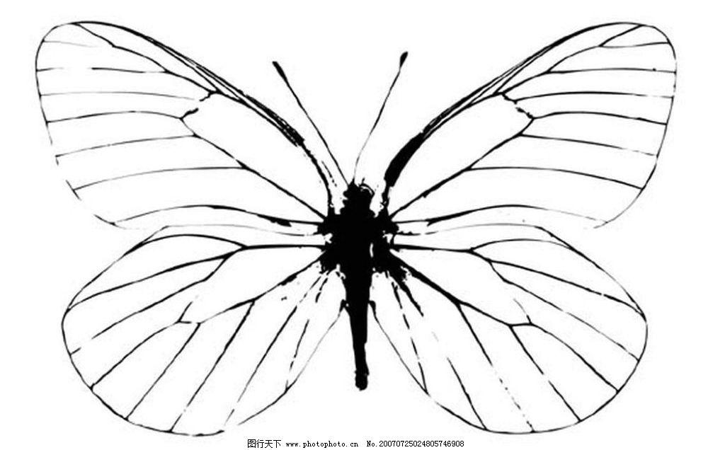 蝴蝶 昆虫 黑白昆虫 黑白矢量图 黑白素材 黑白画 黑白图 矢量 生物