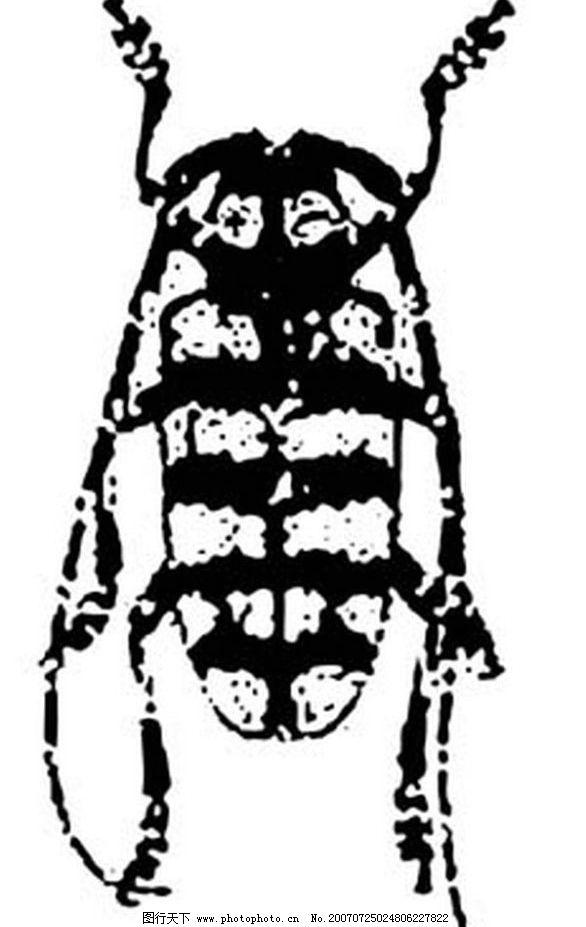 天牛 黑白昆虫 黑白矢量图 黑白素材 黑白画 黑白图 黑白昆虫矢量图