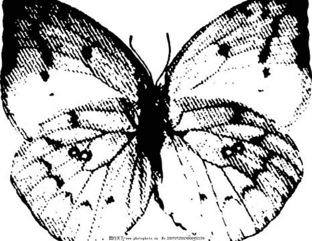 蝴蝶的图片 蝴蝶 昆虫 黑白昆虫 黑白矢量图 黑白素材 黑白画 黑白图