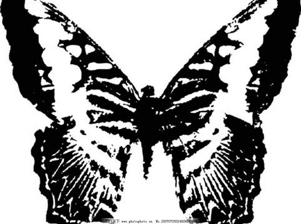 蝴蝶素材图片