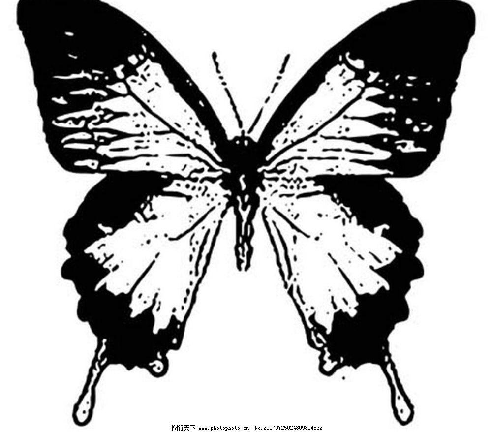 蝴蝶矢量图图片