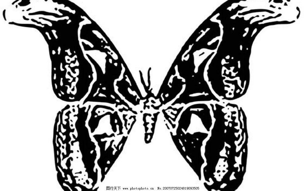 蝴蝶矢量图 昆虫 黑白昆虫 黑白矢量图 黑白素材 黑白画 黑白图 矢量