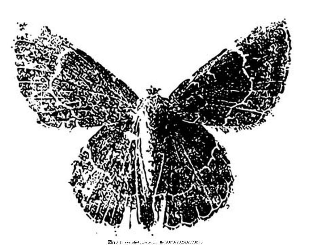 蛾 昆虫 黑白昆虫 黑白矢量图 黑白素材 黑白画 黑白图 矢量 生物世界