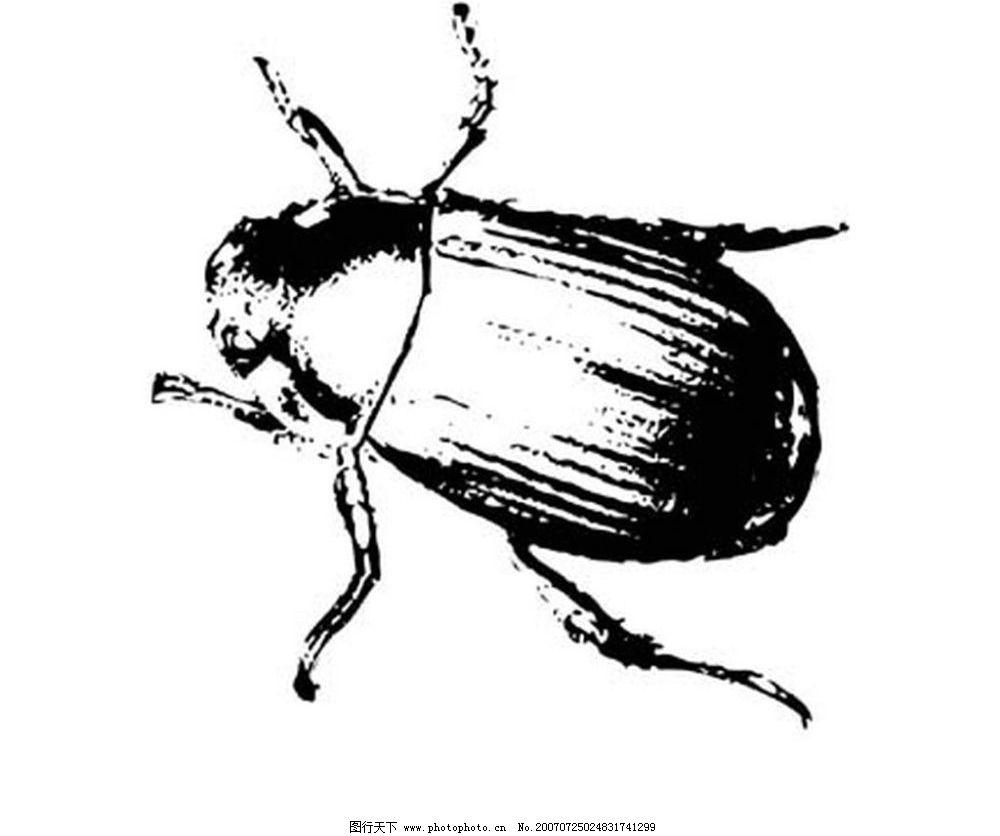 甲壳虫 黑白昆虫 黑白矢量图 黑白素材 黑白画 黑白图 黑白昆虫矢量图